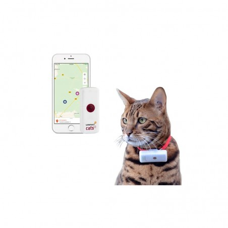 Collier gps pour chat weenect cats 2